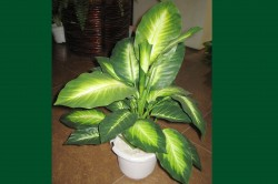 Artificial Plant – Evergreen