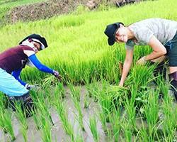 Testimonials for Tigerland Rice Farm in Chiang Rai, northern Thailand