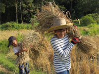 Testimonials for Tigerland Rice Farm in Chiang Rai, northern Thailand