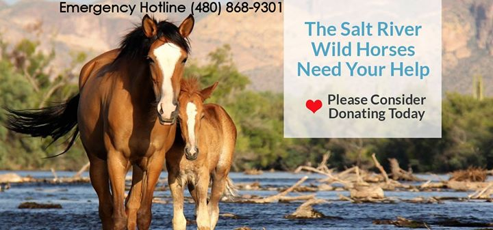 Salt River Wild Horse Management Group – Don't let them become history