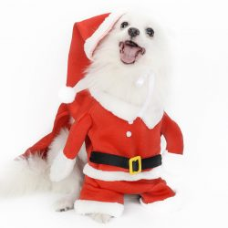 dog christmas clothes manufacturer
