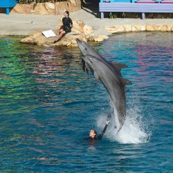 Watch the feature Dolphin presentation, Affinity, twice daily at Sea World on the Gold Coast Aus ...