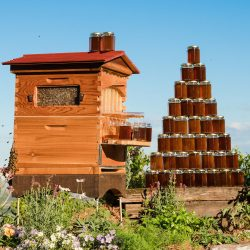 Flow Hive 🐝 – Honey On Tap 🍯 From Your Own Beehive