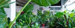 Rare Indoor Plants – The Jungle Collective