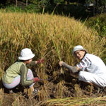 Tigerland Rice Farm, Chiang Rai, Thailand – an experiential eco-vacation with full board f ...