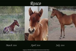 Sponsor a Salt River Wild Horse – Salt River Wild Horse Management Group