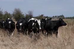 Around and about Caldermeade Farm